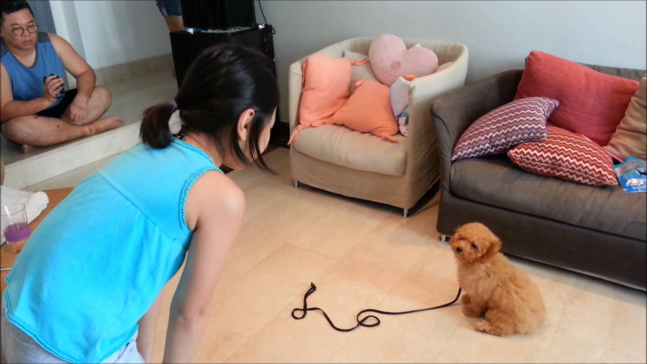 puppy potty training singapore