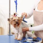 Reasons to choose mobile pet grooming services in Fort Lauderdale