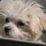 Potty Dogs Training Method