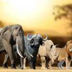 Going back to nature on an African safari